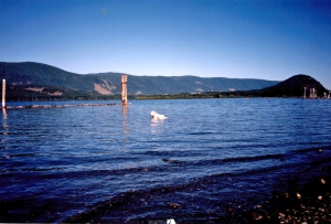Sandi Lake Cowichan