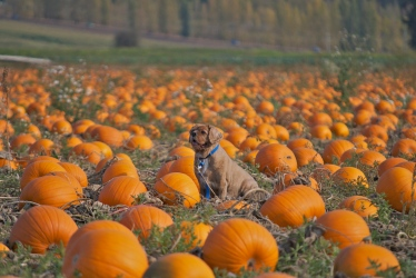 FUN DAY IN THE PUMPKIN PATCH!