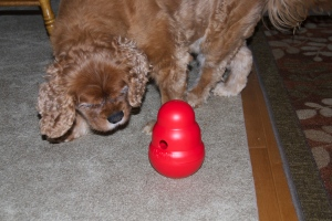 Caymans Kong Toy 2